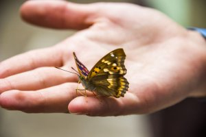 Butterfly Symbolism – Butterfly Meaning and Spiritual Messages
