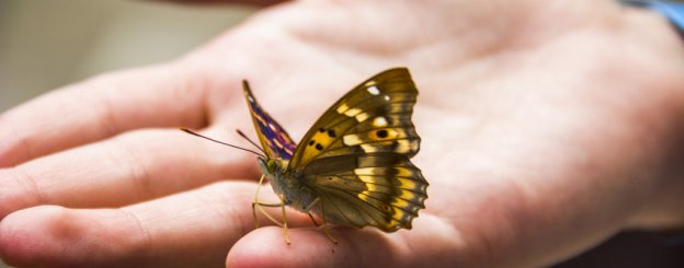 Butterfly Symbolism - Butterfly Meaning and Spiritual Messages