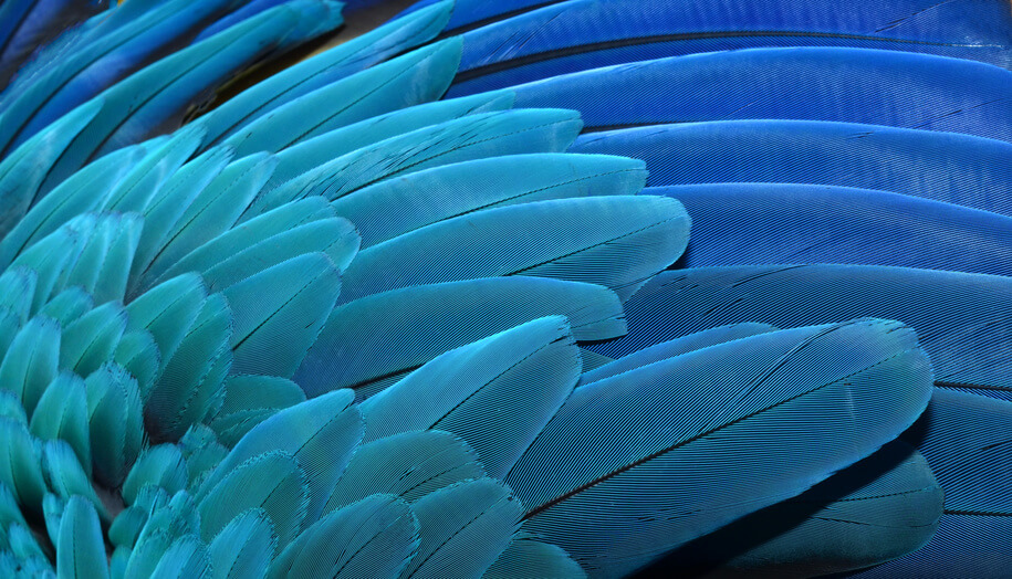 Feather Symbolism The Meaning Of Feathers And Their Power