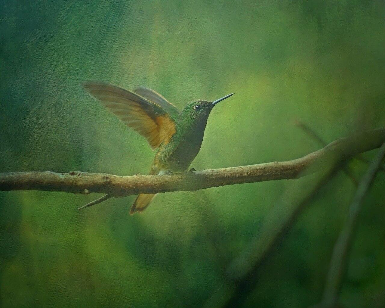 Hummingbird Symbolism And Spirituality