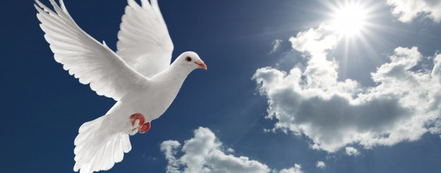 Dove Symbolism A Guide To The Various Meanings Of Doves