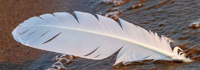 White Feather Guide